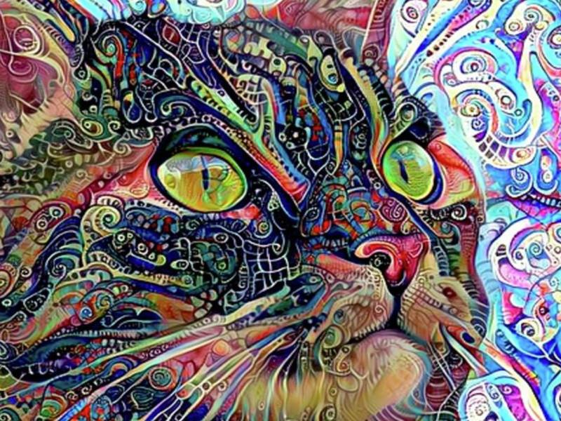 кошка глазами употребляющего ЛСД