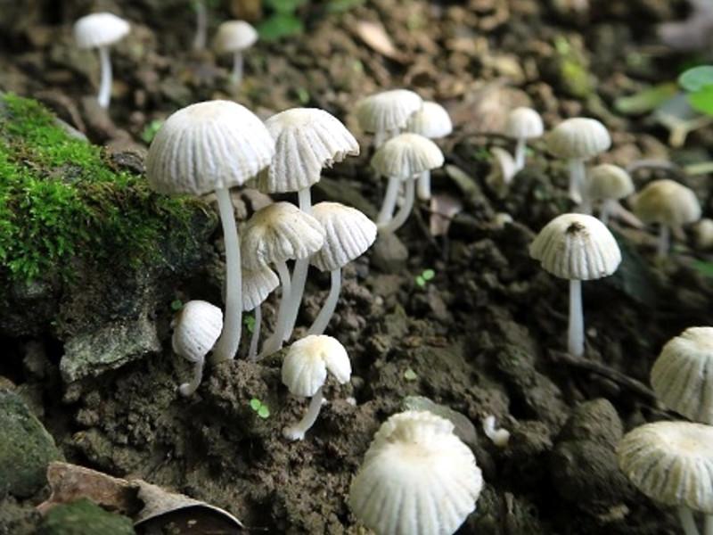 галлюциногенные грибы на мху